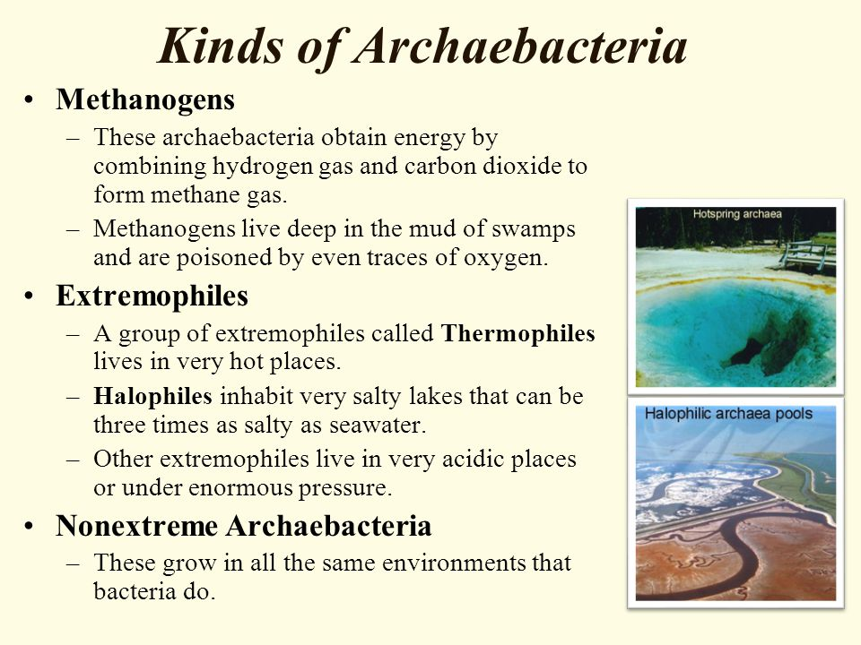 Kinds of Archaebacteria Methanogens –These archaebacteria obtain energy by combining hydrogen gas and carbon dioxide to form methane gas. –Methanogens