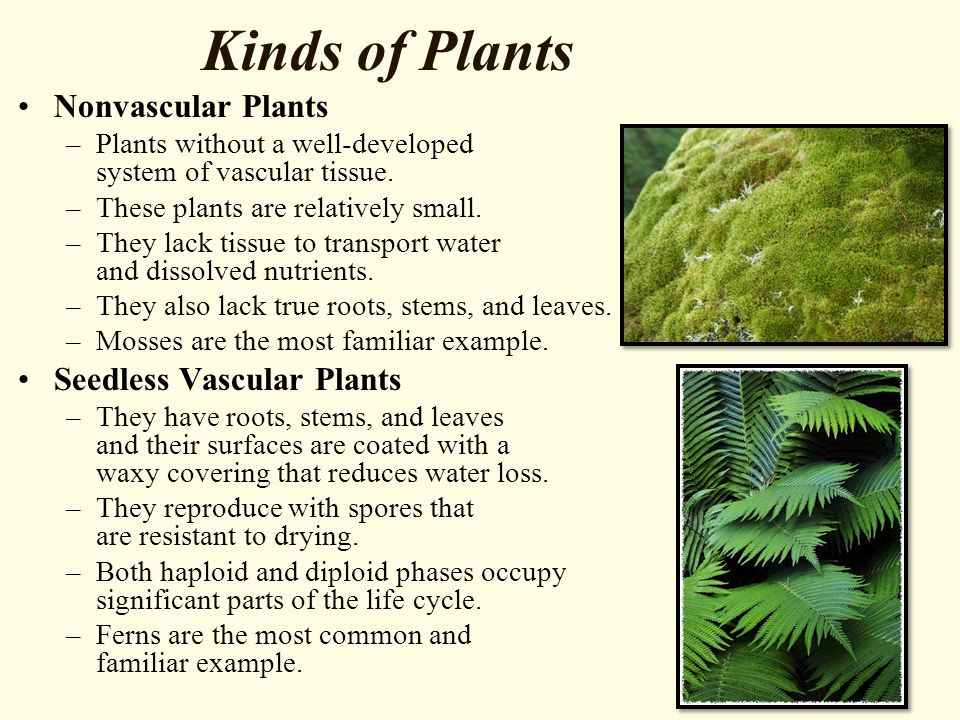 Kinds of Plants Nonvascular Plants –Plants without a well-developed system of vascular tissue. –These plants are relatively small. –They lack tissue t