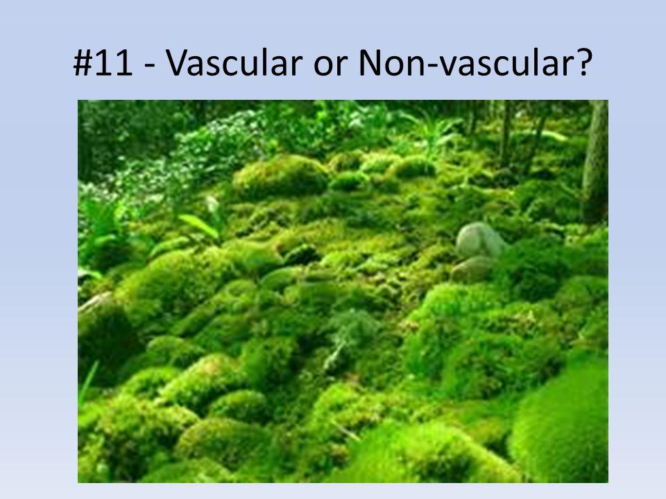 #11 - Vascular or Non-vascular?