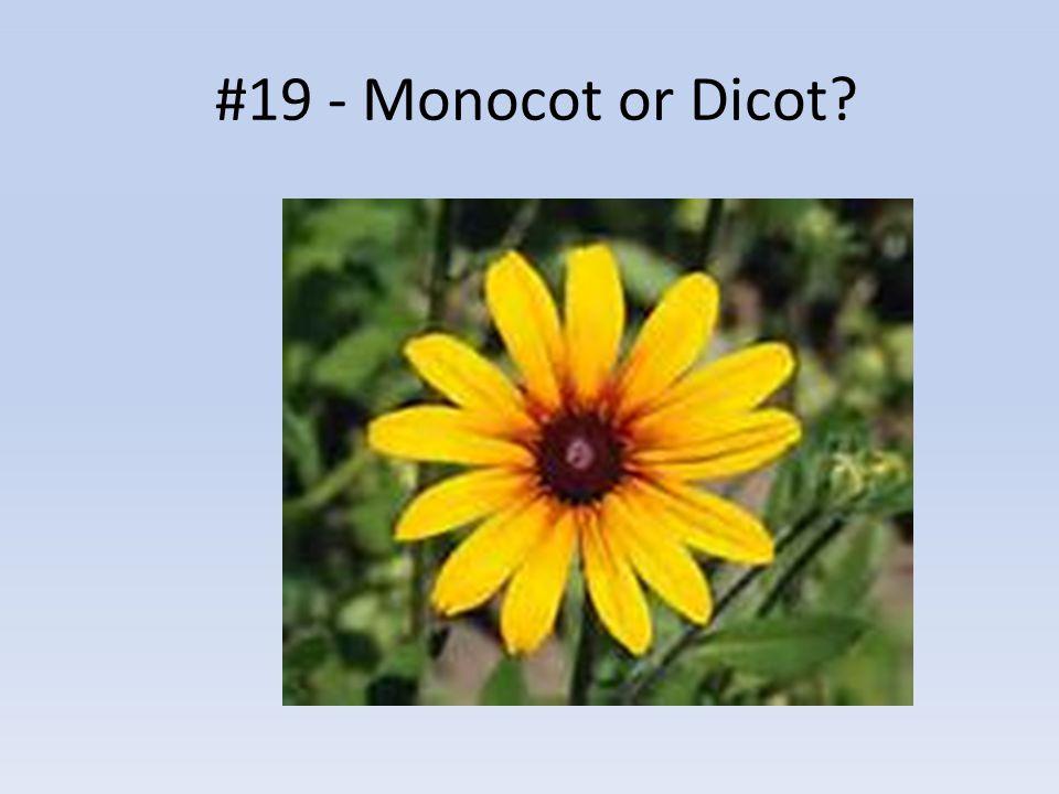 #19 - Monocot or Dicot?