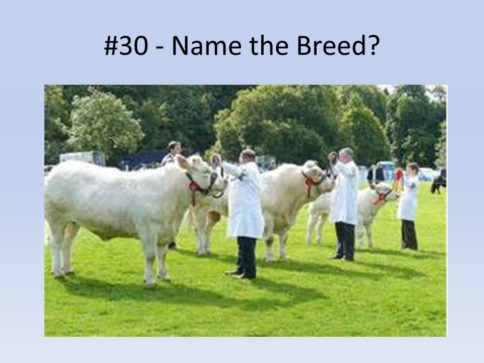 #30 - Name the Breed?