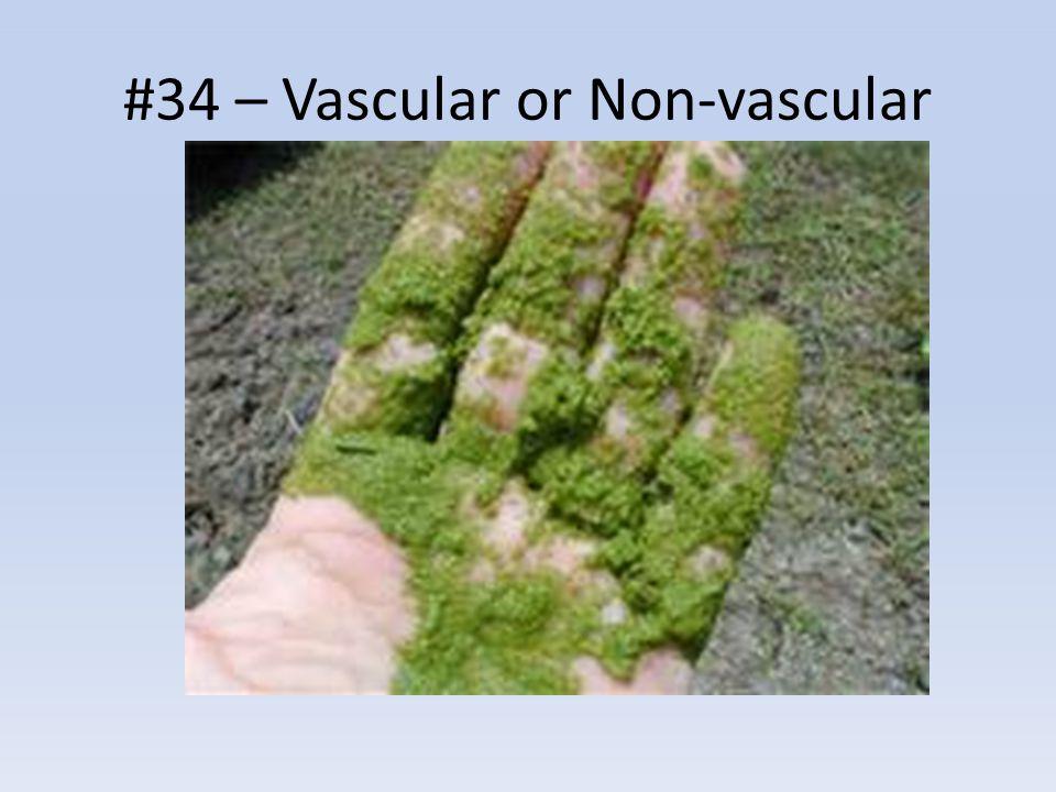 #34 – Vascular or Non-vascular