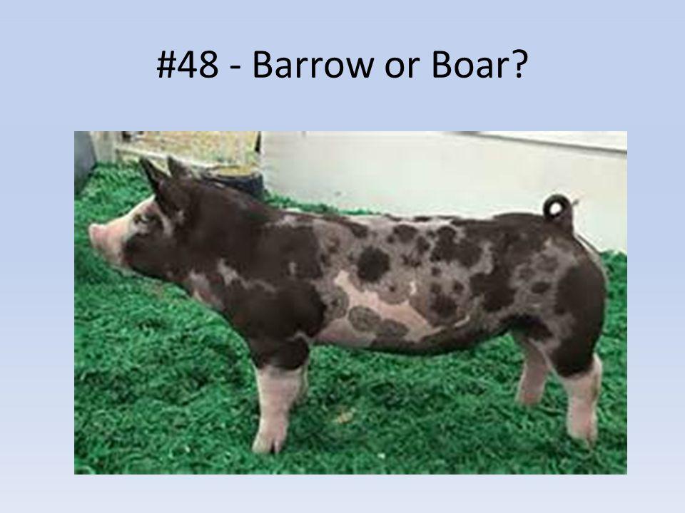 #48 - Barrow or Boar?