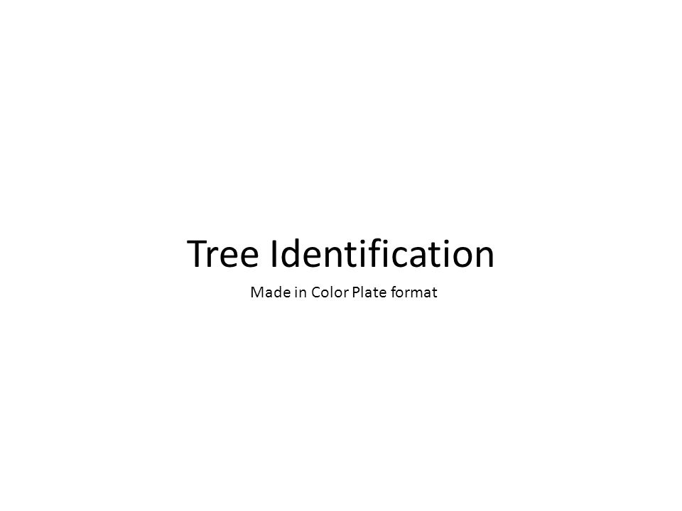 Tree Identification Made in Color Plate format
