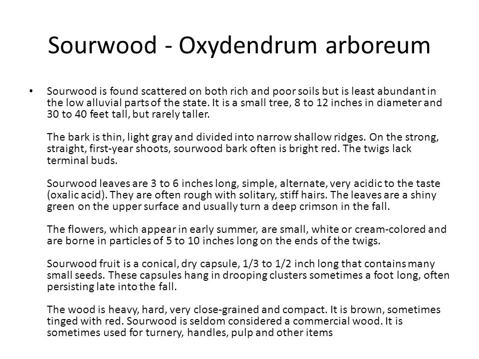 Sourwood - Oxydendrum arboreum Sourwood is found scattered on both rich and poor soils but is least abundant in the low alluvial parts of the state. I