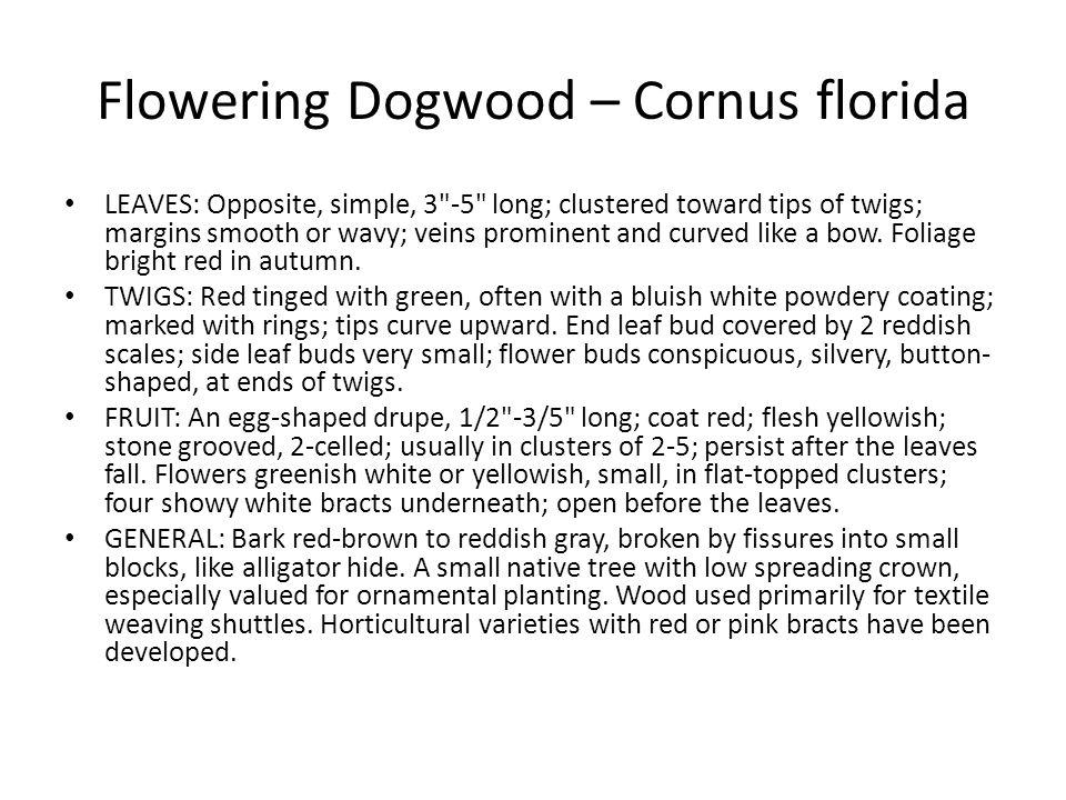 Flowering Dogwood – Cornus florida LEAVES: Opposite, simple, 3