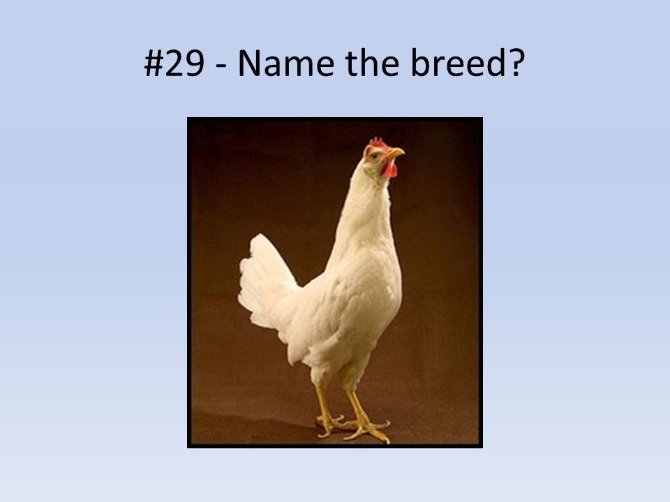 #29 - Name the breed?