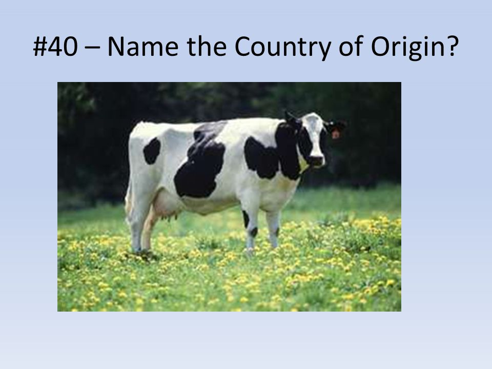 #40 – Name the Country of Origin?