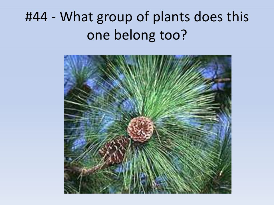 #44 - What group of plants does this one belong too?