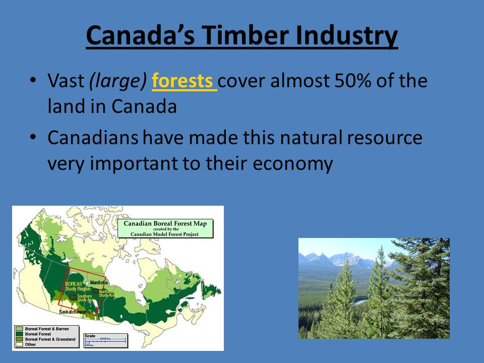 Canada's Timber Industry Vast (large) forests cover almost 50% of the land in Canada Canadians have made this natural resource very important to their