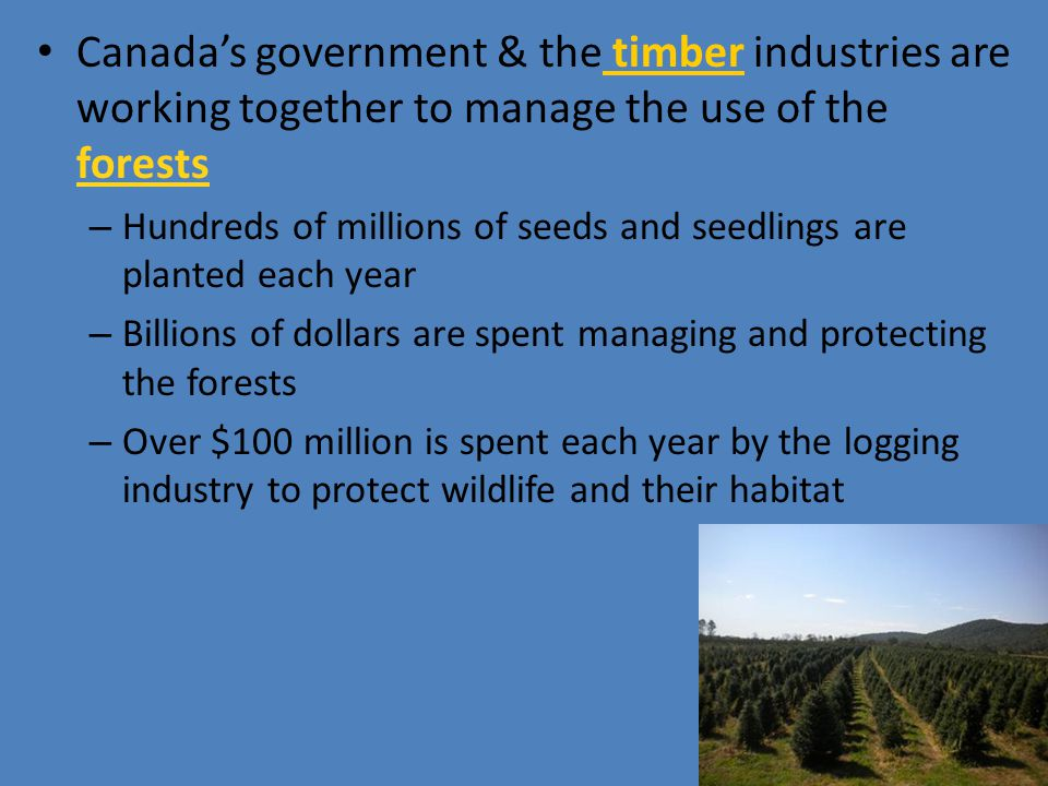Canada's government & the timber industries are working together to manage the use of the forests – Hundreds of millions of seeds and seedlings are pl