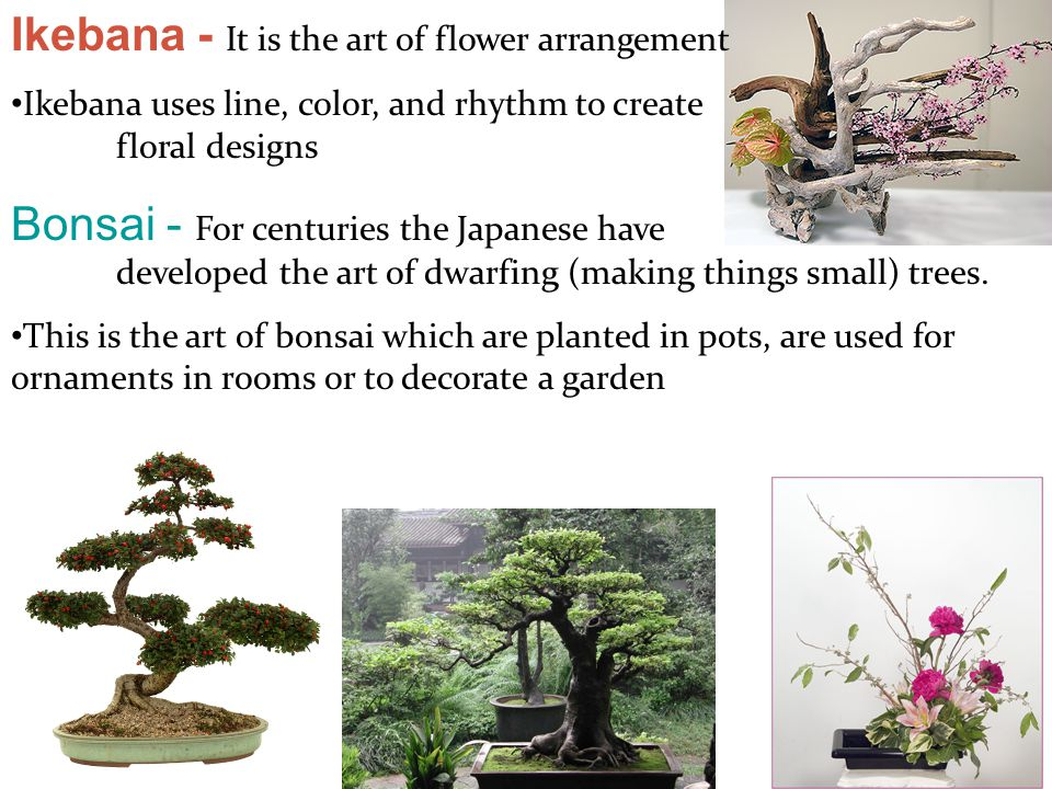 Ikebana - It is the art of flower arrangement Ikebana uses line, color, and rhythm to create floral designs Bonsai - For centuries the Japanese have d