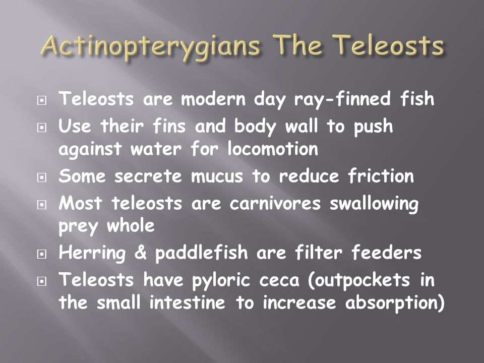  Teleosts are modern day ray-finned fish  Use their fins and body wall to push against water for locomotion  Some secrete mucus to reduce friction