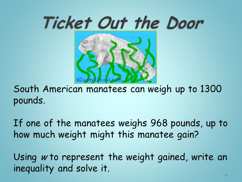 South American manatees can weigh up to 1300 pounds.