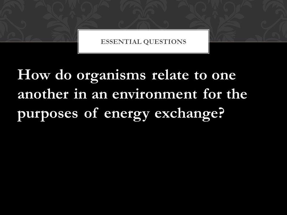 How do organisms relate to one another in an environment for the purposes of energy exchange? ESSENTIAL QUESTIONS