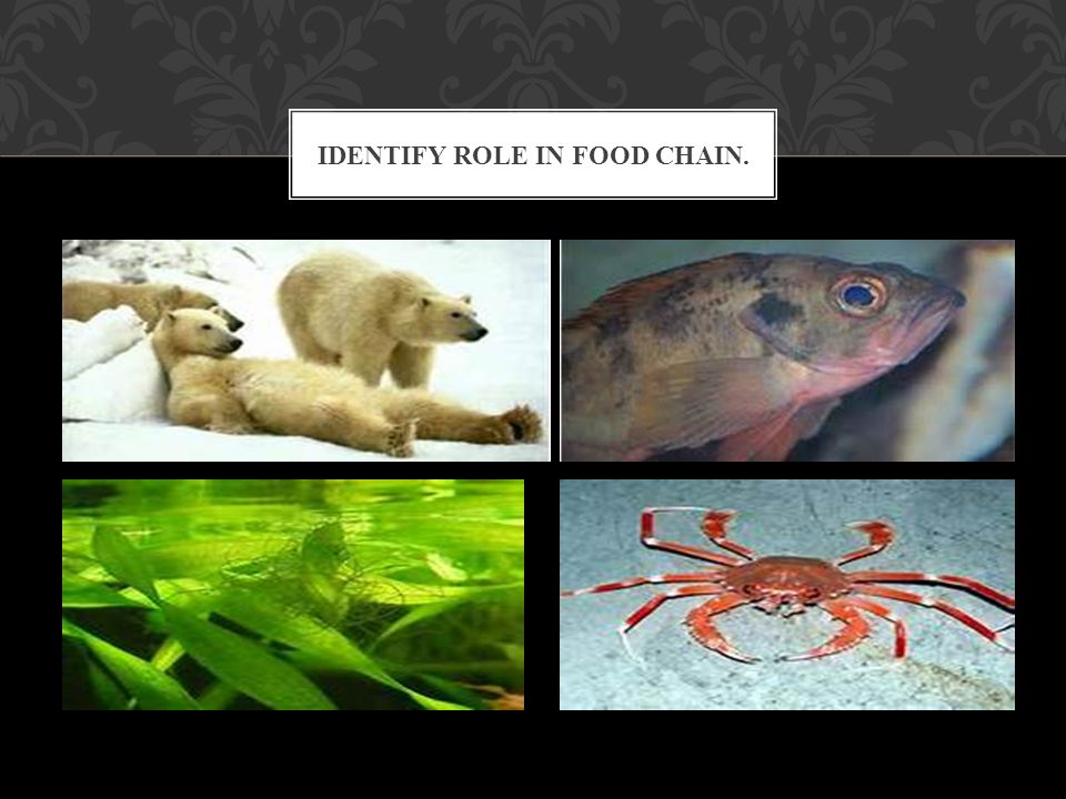 IDENTIFY ROLE IN FOOD CHAIN.