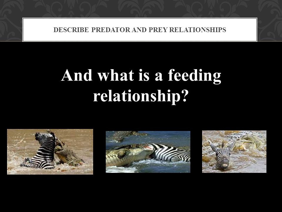 And what is a feeding relationship? DESCRIBE PREDATOR AND PREY RELATIONSHIPS