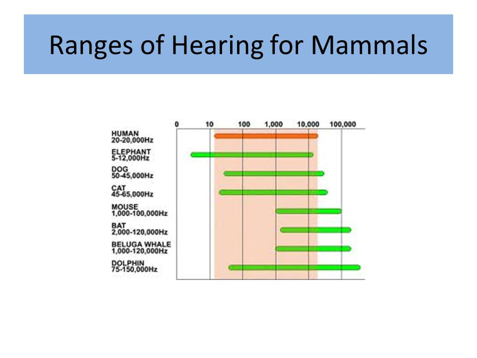 Ranges of Hearing for Mammals