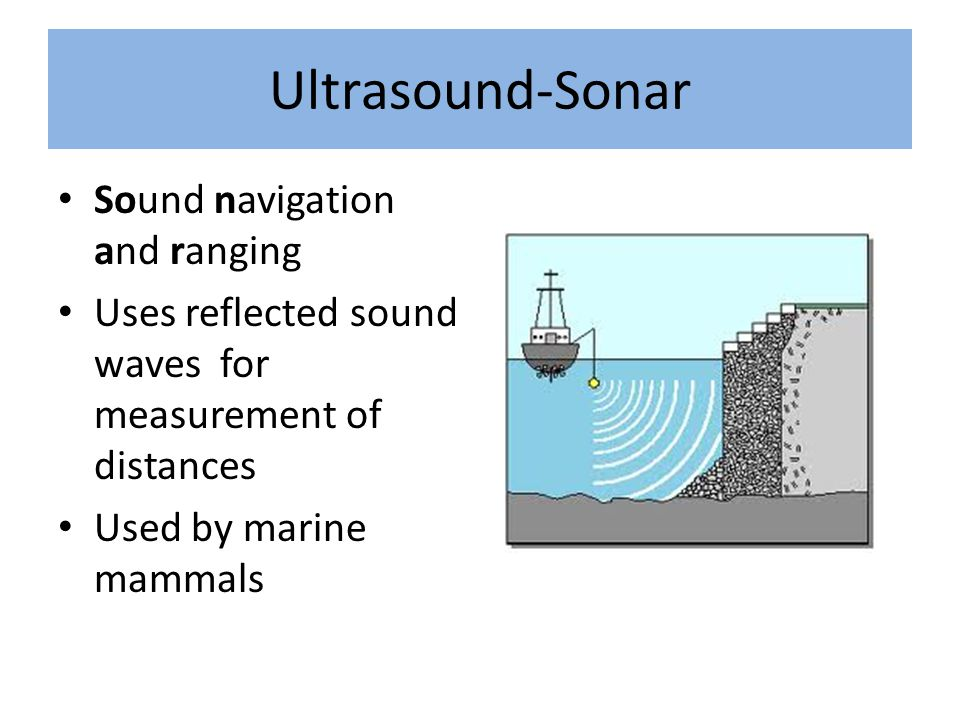 Ultrasound-Sonar Sound navigation and ranging Uses reflected sound waves for measurement of distances Used by marine mammals