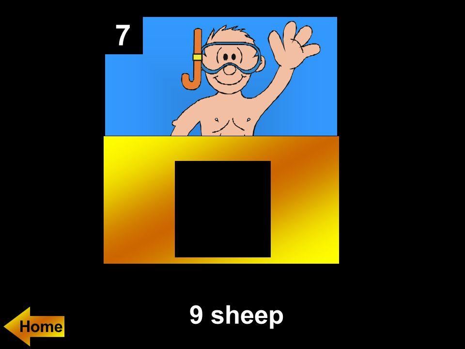 7 9 sheep