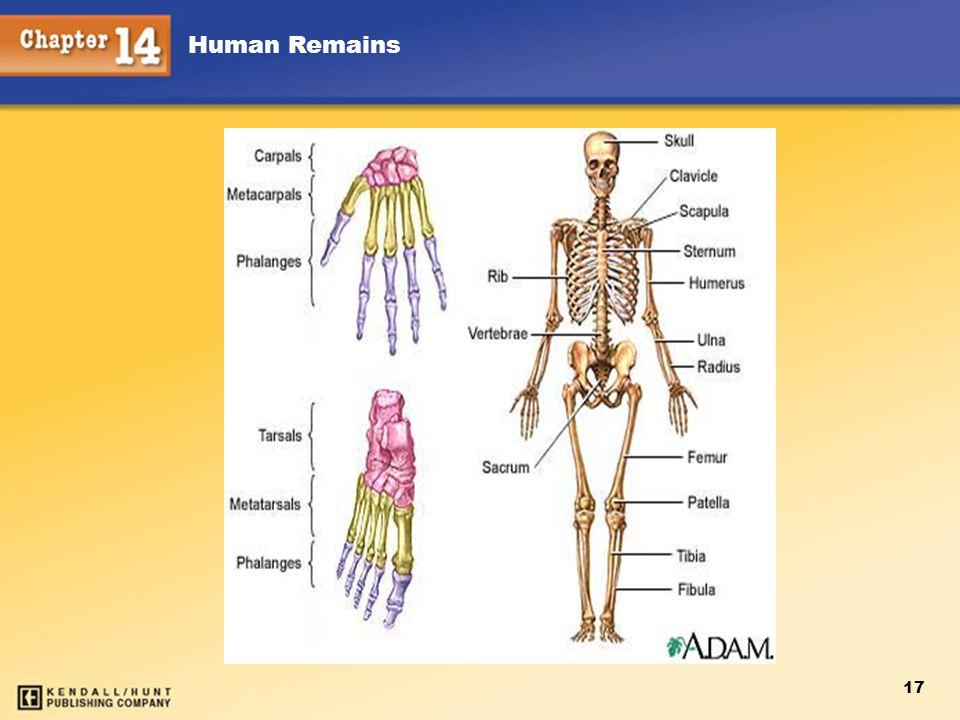 Human Remains 17
