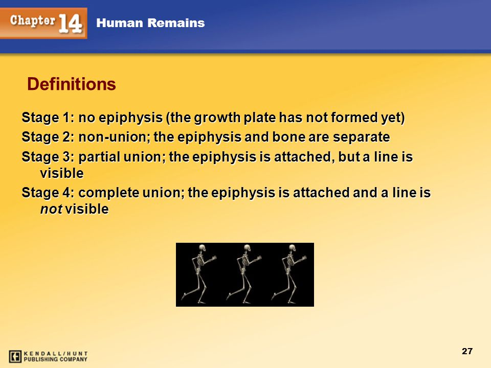 Human Remains 27 Definitions Stage 1: no epiphysis (the growth plate has not formed yet) Stage 2: non-union; the epiphysis and bone are separate Stage