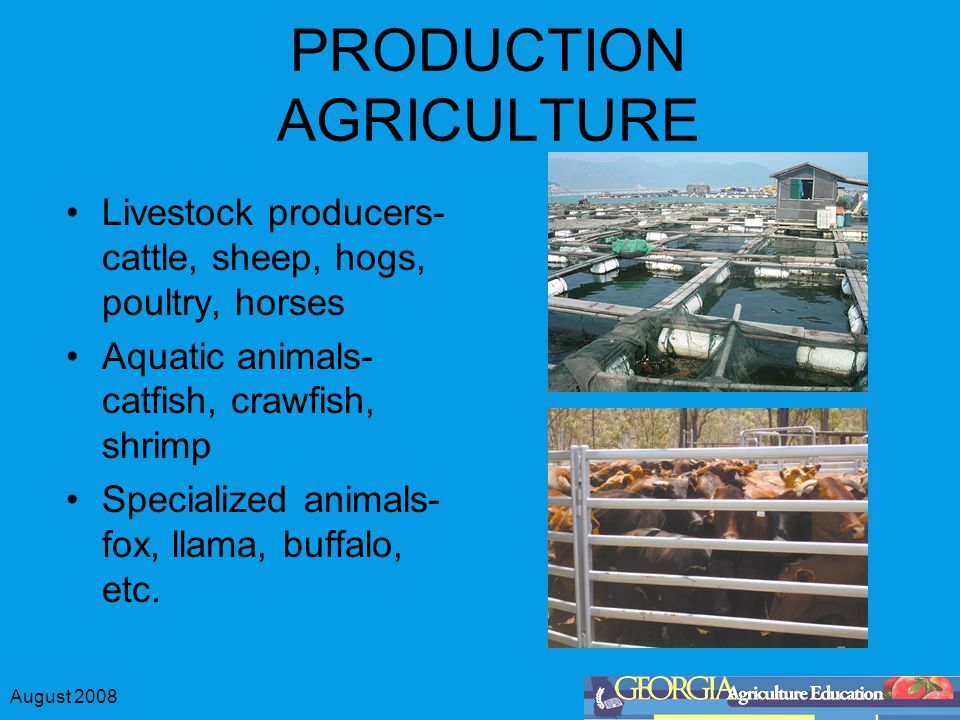 August 2008 PRODUCTION AGRICULTURE Livestock producers- cattle, sheep, hogs, poultry, horses Aquatic animals- catfish, crawfish, shrimp Specialized animals- fox, llama, buffalo, etc.
