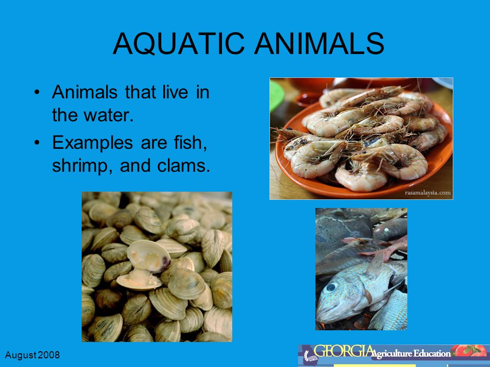 August 2008 AQUATIC ANIMALS Animals that live in the water. Examples are fish, shrimp, and clams.