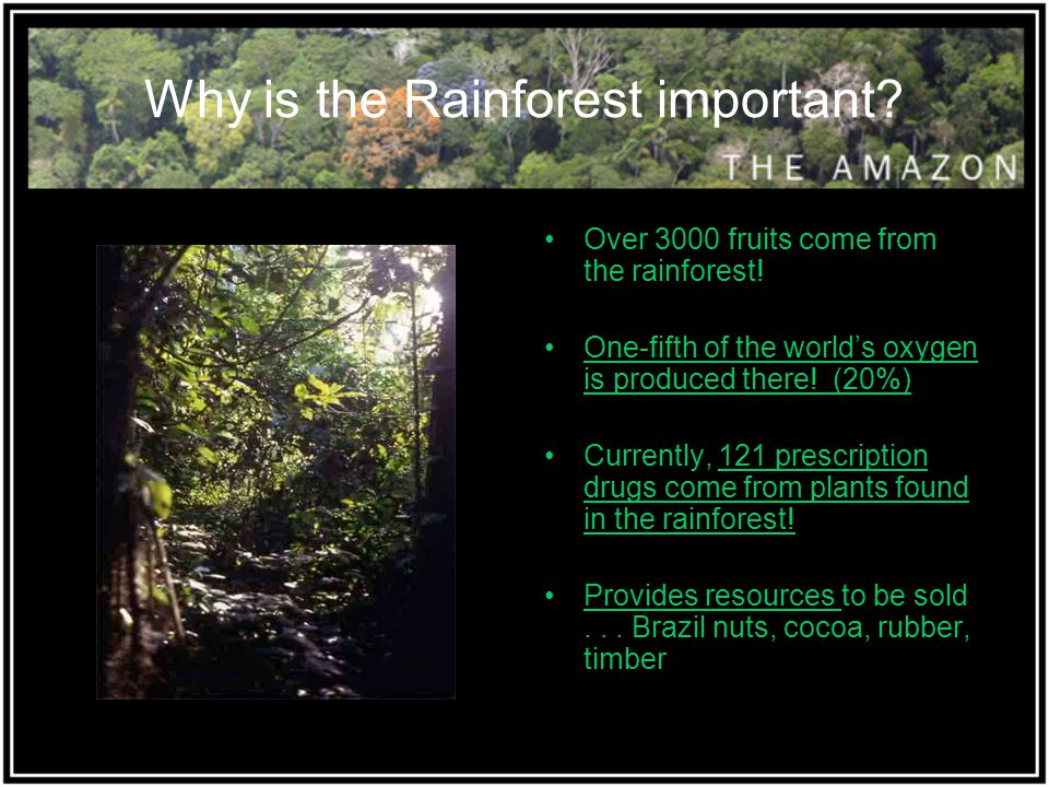 Why is the Rainforest important? Over 3000 fruits come from the rainforest! One-fifth of the world's oxygen is produced there! (20%) Currently, 121 pr