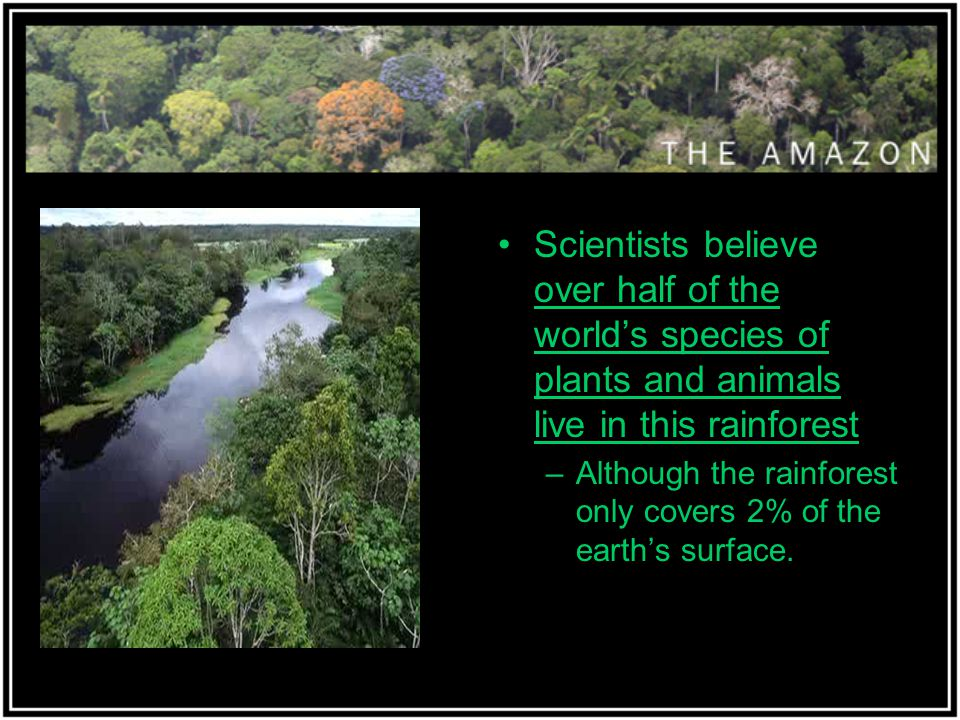 Scientists believe over half of the world's species of plants and animals live in this rainforest –Although the rainforest only covers 2% of the earth's surface.