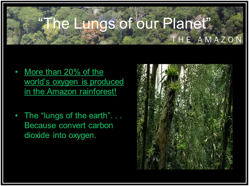 The Lungs of our Planet More than 20% of the world's oxygen is produced in the Amazon rainforest.