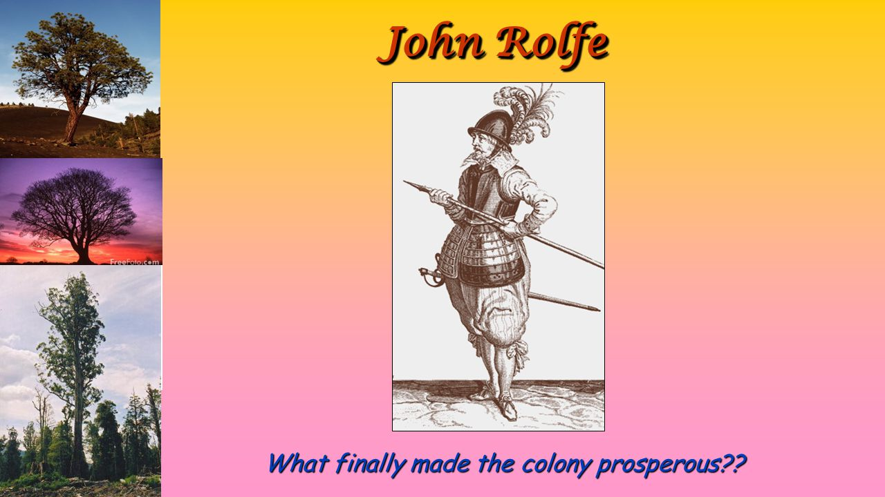 John Rolfe What finally made the colony prosperous??