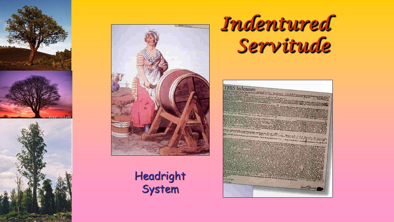 Indentured Servitude Headright System