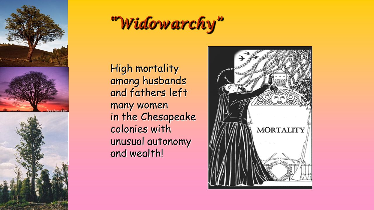 """Widowarchy""""Widowarchy"" High mortality among husbands and fathers left many women in the Chesapeake colonies with unusual autonomy and wealth!"
