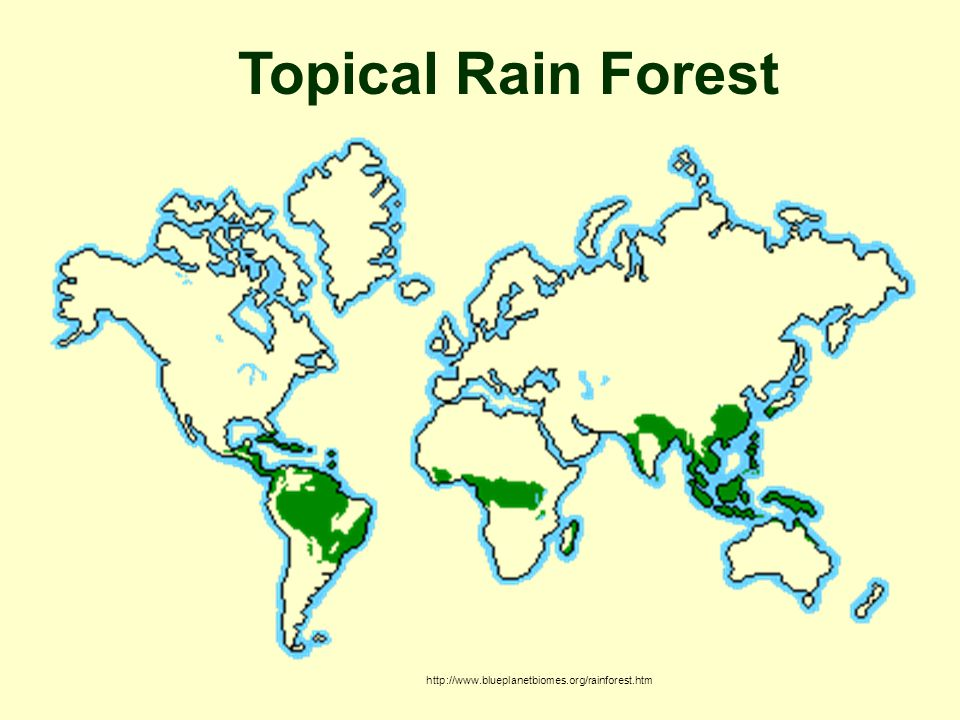 http://www.blueplanetbiomes.org/rainforest.htm Topical Rain Forest