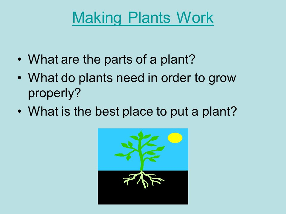 Making Plants Work What are the parts of a plant. What do plants need in order to grow properly.