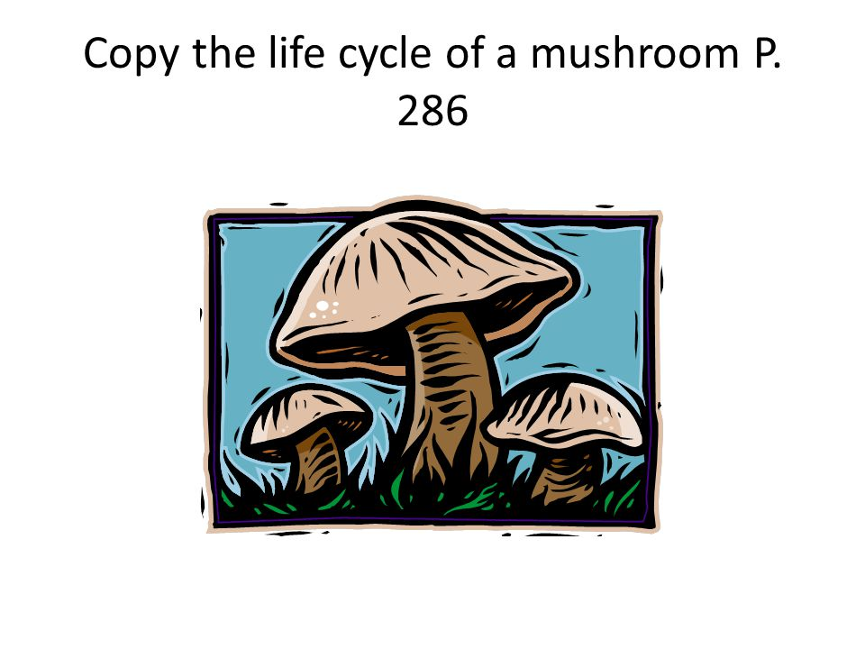 Copy the life cycle of a mushroom P. 286