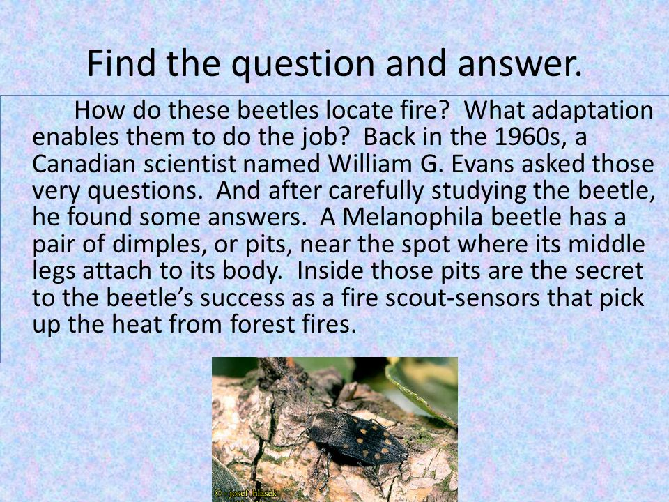 Find the question and answer. How do these beetles locate fire.