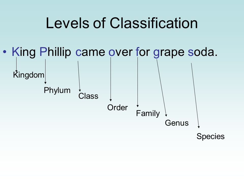 Levels of Classification King Phillip came over for grape soda.