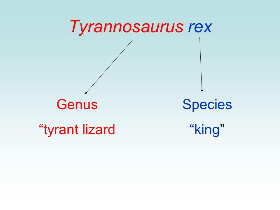 Tyrannosaurus rex Genus tyrant lizard Species king