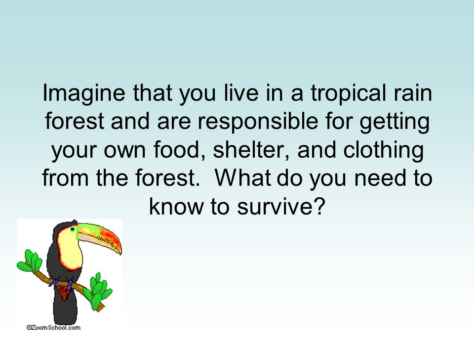 Imagine that you live in a tropical rain forest and are responsible for getting your own food, shelter, and clothing from the forest. What do you need