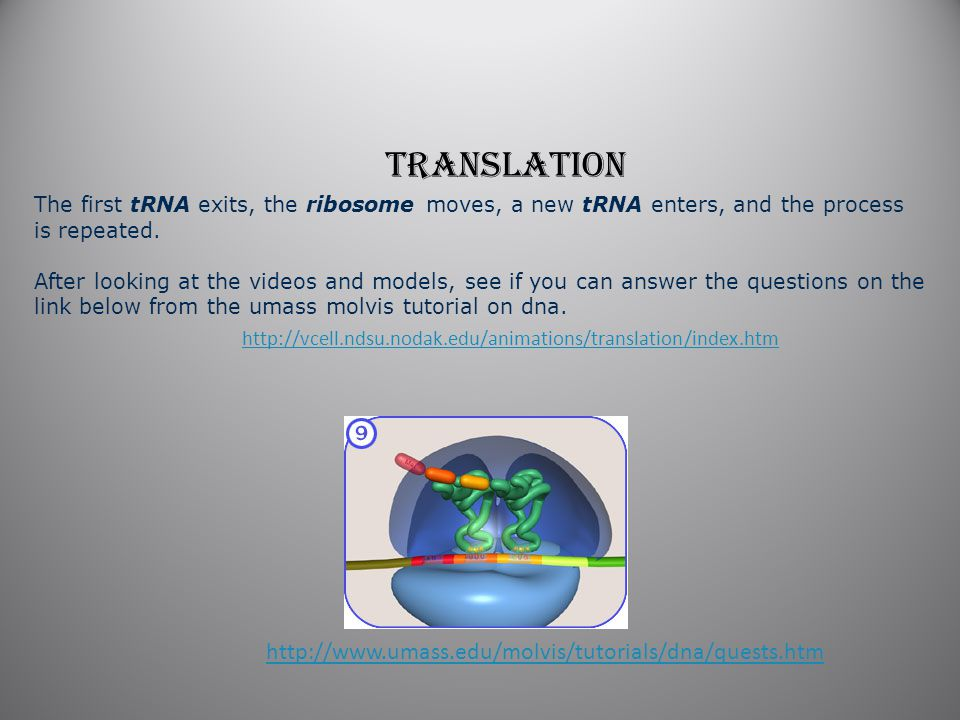 http://vcell.ndsu.nodak.edu/animations/translation/index.htm The first tRNA exits, the ribosome moves, a new tRNA enters, and the process is repeated.