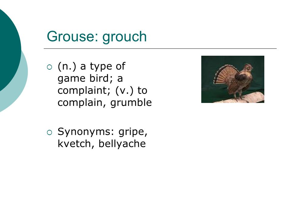 Grouse: grouch  (n.) a type of game bird; a complaint; (v.) to complain, grumble  Synonyms: gripe, kvetch, bellyache