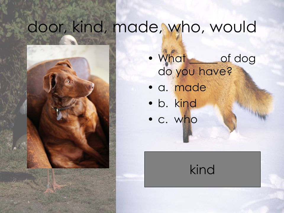 door, kind, made, who, would What _____ of dog do you have a. made b. kind c. who kind