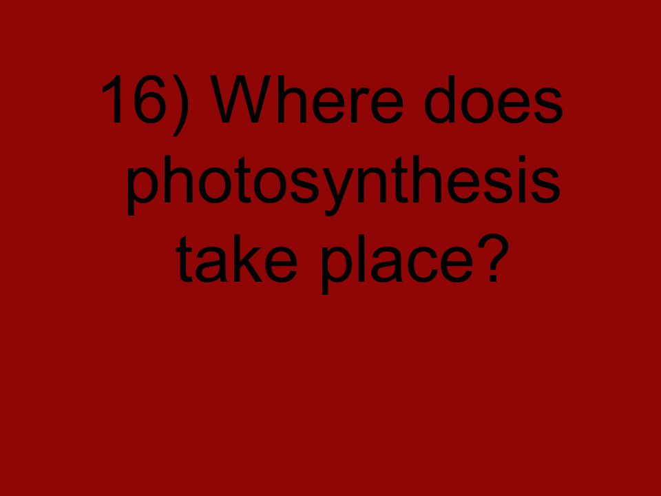 16) Where does photosynthesis take place?