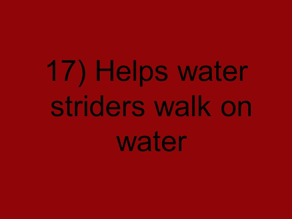 17) Helps water striders walk on water