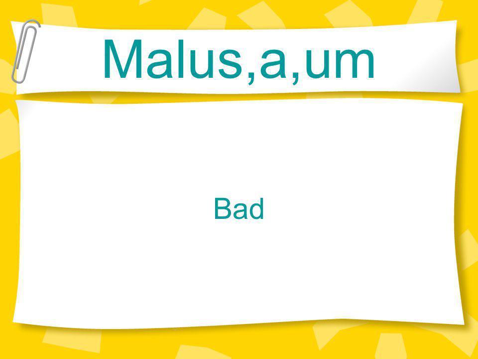 Malus,a,um Bad