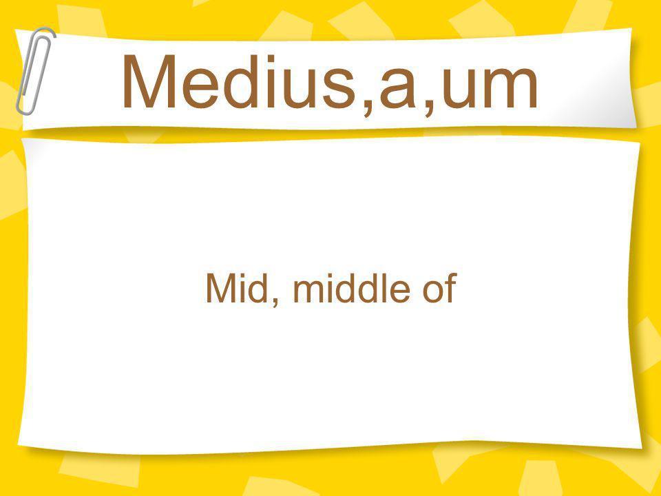Medius,a,um Mid, middle of