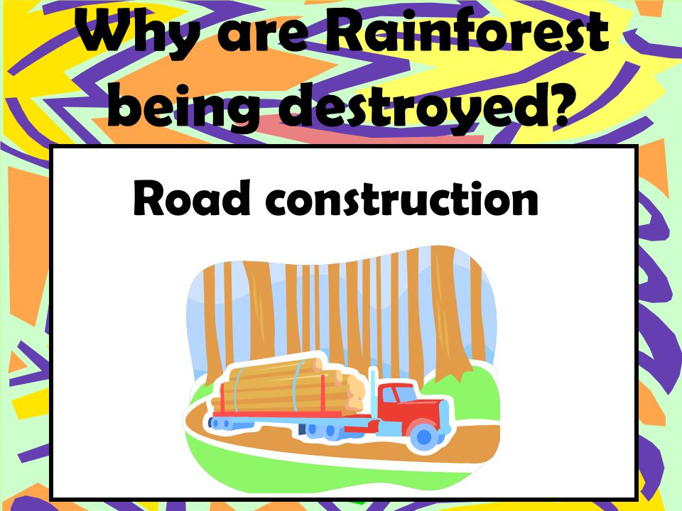Why are Rainforest being destroyed Road construction