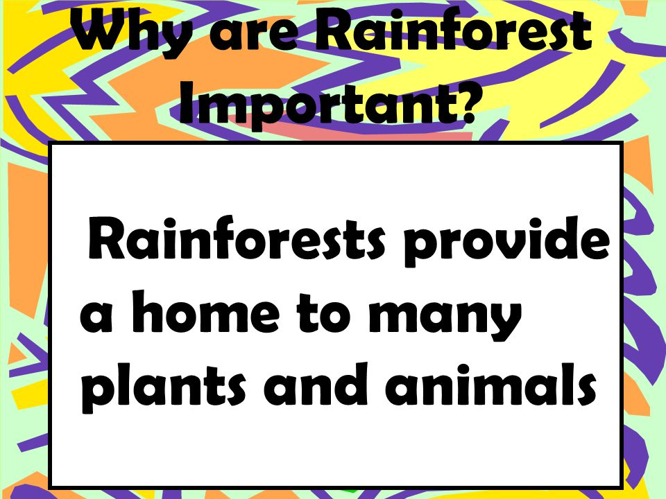 Why are Rainforest Important Rainforests provide a home to many plants and animals